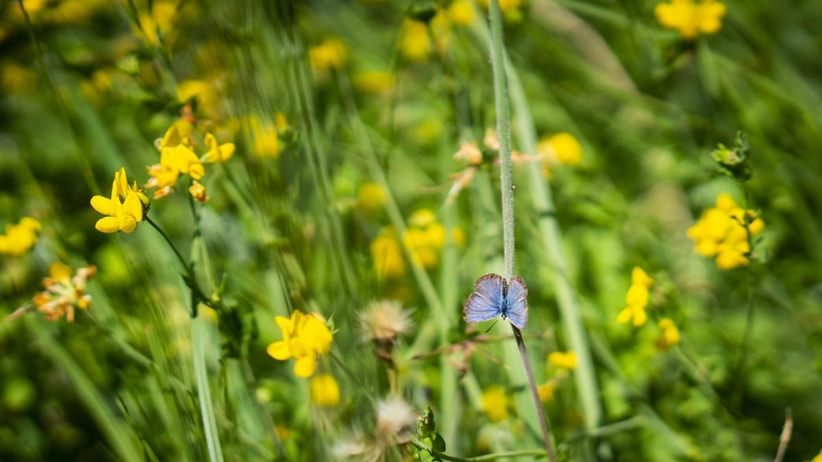 Blumen am Federsee