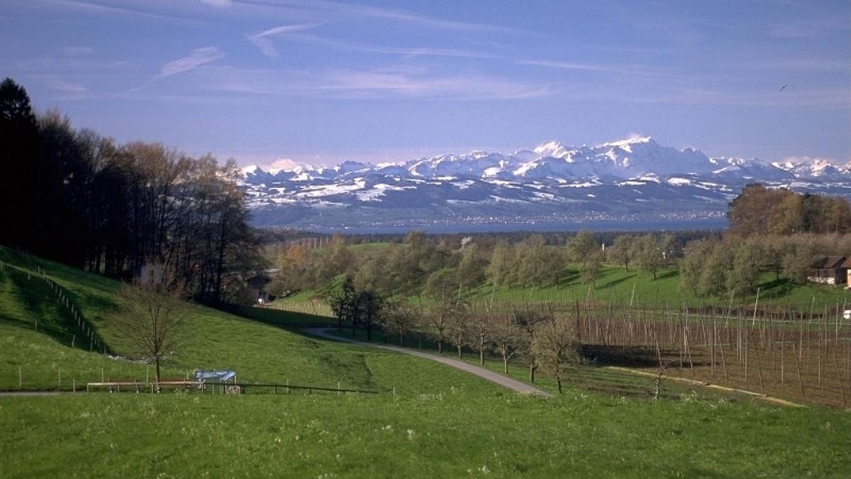 Aussichtspunkte entlang des Oberschwaben-Allgäu-Radwegs: Bergblick in Tettnang
